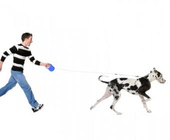 Hundeschule in Buchholz