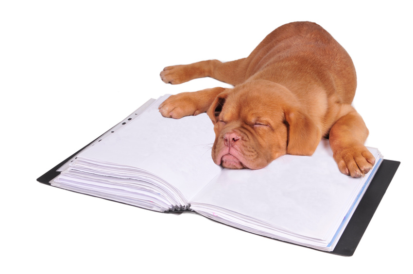 Puppy sleeping on a document folder